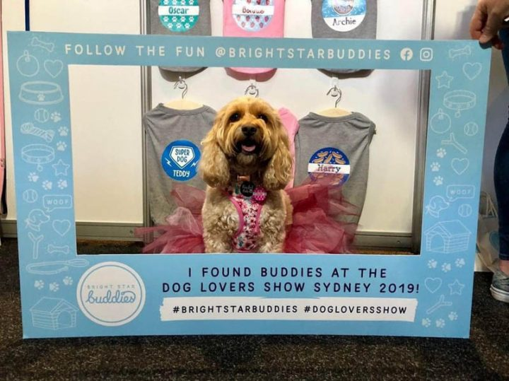 DOG LOVERS SHOW