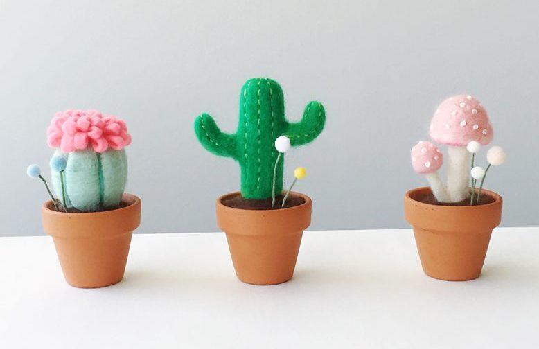 crazy about cactus