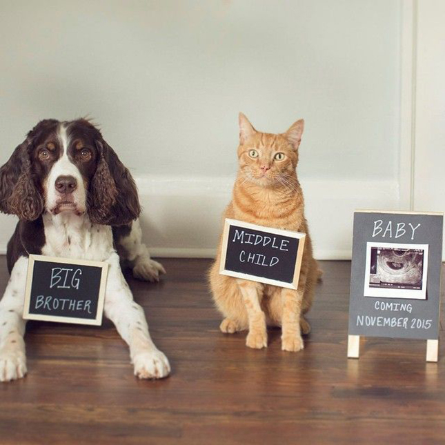 27 Pregnancy Sibling Announcement Ideas Bright Star Kids – Birth Announcement with Dog